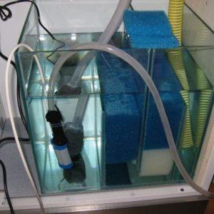 Spugne per Acquario SUMP