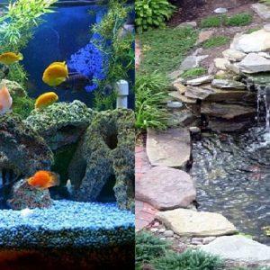 Aquarien-Teiche